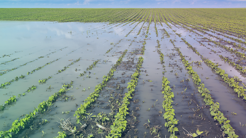 Crop flood