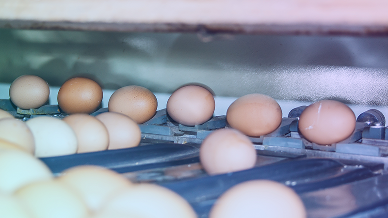 eggs cold chain monitoring