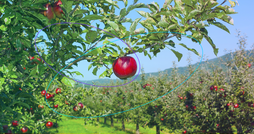 Fruit growers love IoT