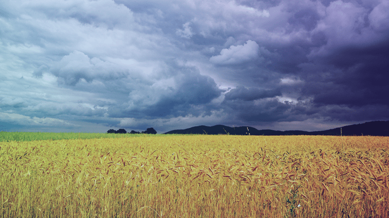 How Rainfall Affects Crop Health