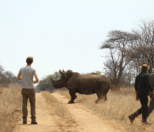Sigfox Foundation partners with three international conservation organisations to give a voice to endangered Rhinos with the Internet of Things (Iot)